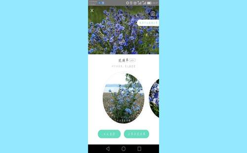 花草識別app開發